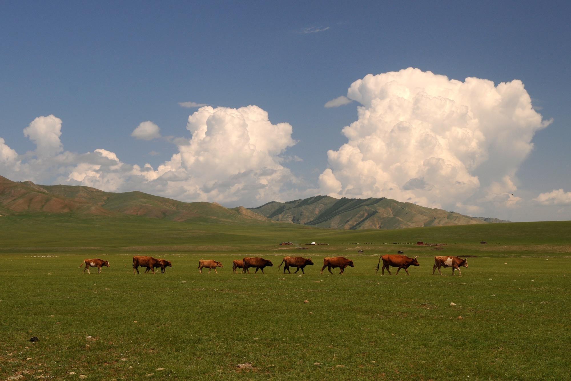 Llanuras de Mongolia